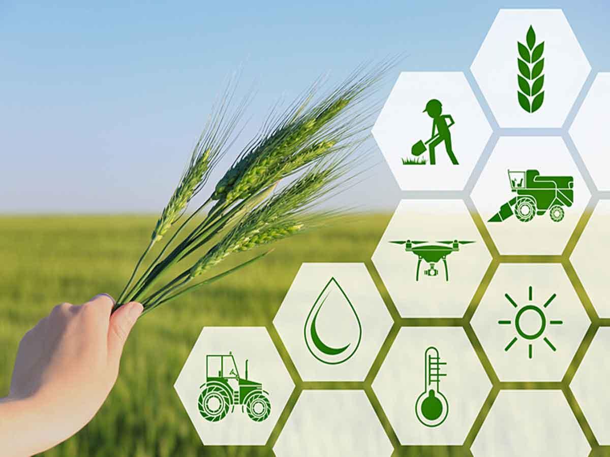Strengthening Agricultural Market Infrastructure